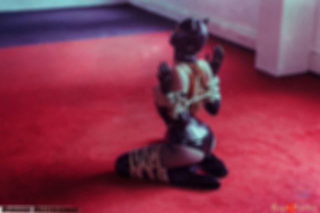 Rubber kinbaku kitten