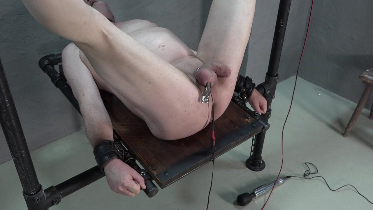 Schwanz unter Strom